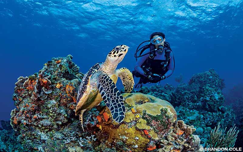 A female diver swims next to a sea turtle.