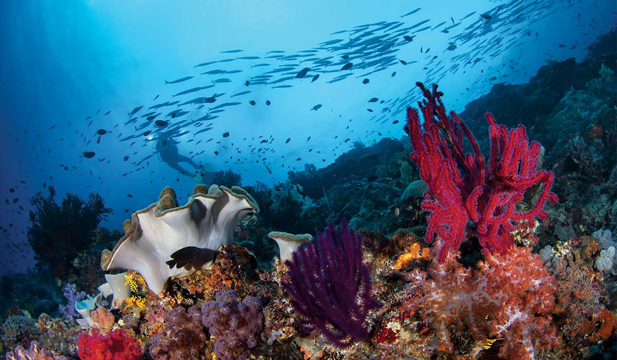 A very pretty reef with a diver way in the background