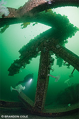 A diver explores the jungle gym of giant steel H-beams purpose-sunk for divers in Porteau Cove Provincial Park.