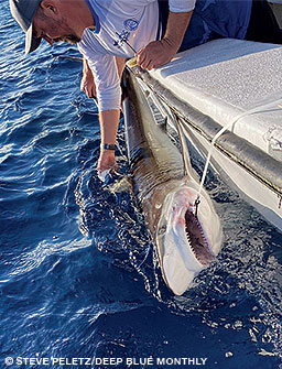 A man applies a tracking tag to a shark from a boat off Cocos Island.