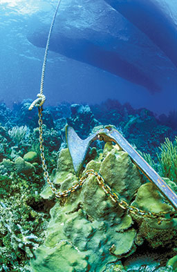An anchor is lying on coral and possibly damaging it.