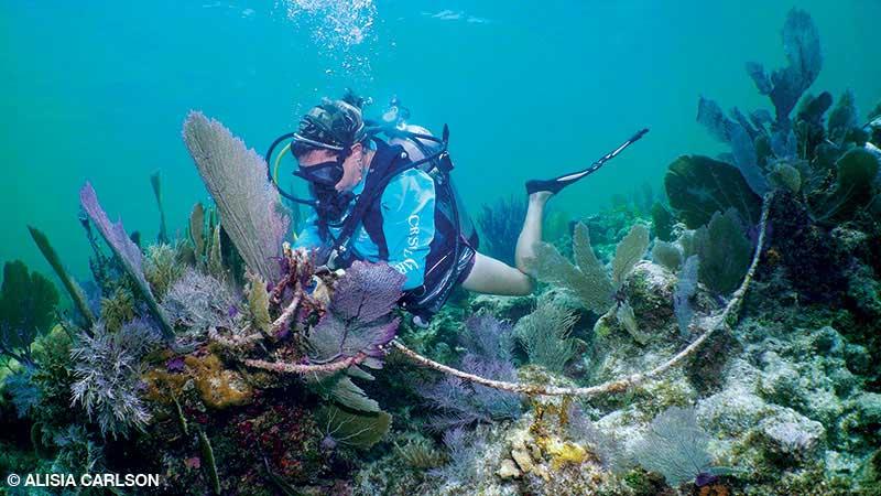 A volunteer diver removes underwater marine debris in the Florida Keys.