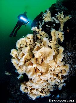 Cloud sponges light up the emerald gloom 100 feet below the surface.