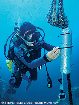 A diver sets an acoustic receiver at Cocos Island to track tagged sharks.