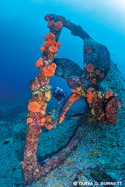 An intact propeller on the stern of an underwater shipwreck with a diver in the background