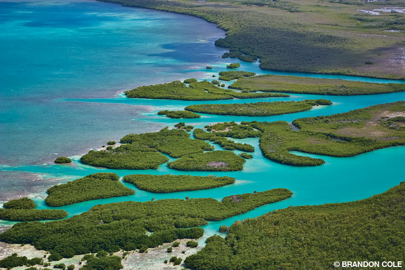 Mangroves near a river mouth along the Belize coast