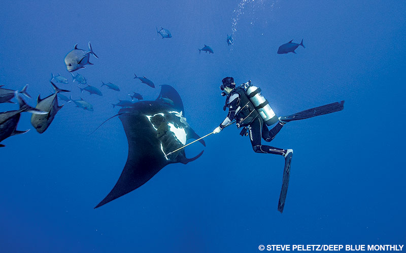 Mauricio Hoyos takes a manta tissue sample off San Benedicto Island, Archipelago de Revillagigedo.