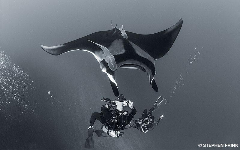 A diver with camera gear photographs a manta ray.