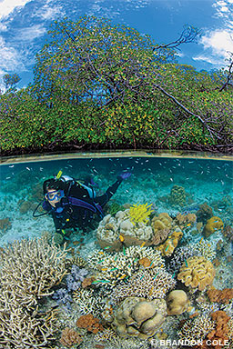 A split view shows a diver with corals near mangroves in Indonesia