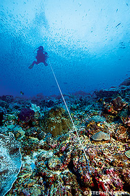 A diver is using a reef hook attached to some coral in the foreground with a line leading to the diver in the distance