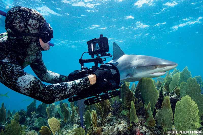 Videographer filming a reef shark
