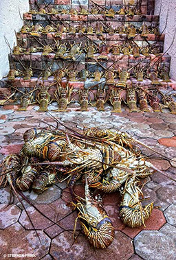 A group of dead lobsters posed on stairs
