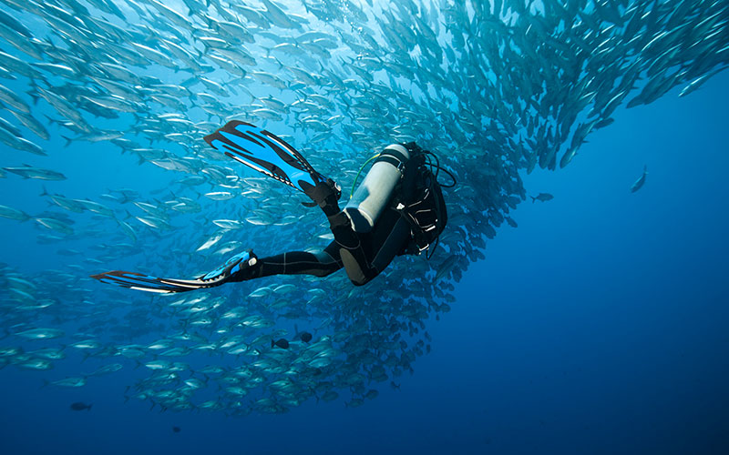 Dive swims toward school of fish