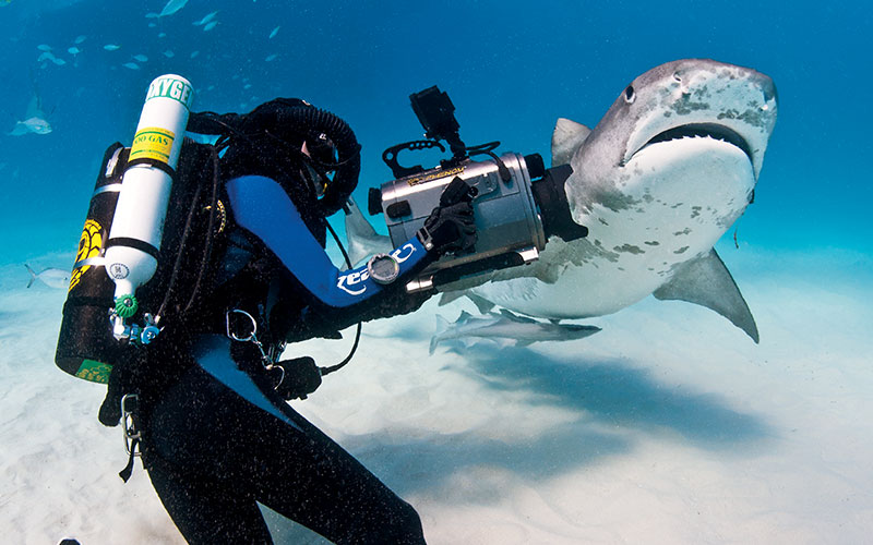A rebreather diver, holding a camera, tries to take a photo of a nearby shark