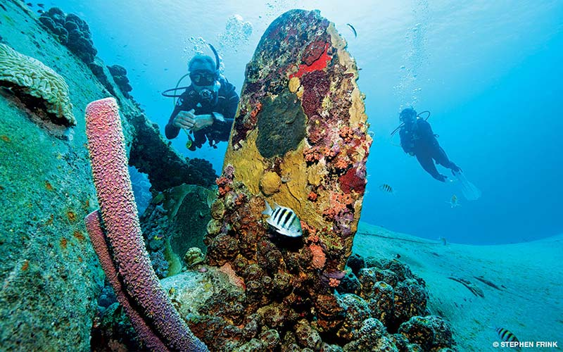 Two divers swim up to corals