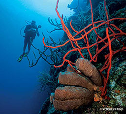 Diver floats near corals. Diver is holding a camera. One coral is red