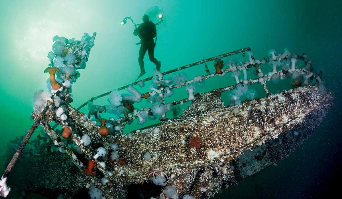 Diver hovers over a sponge-encrusted shipwreck
