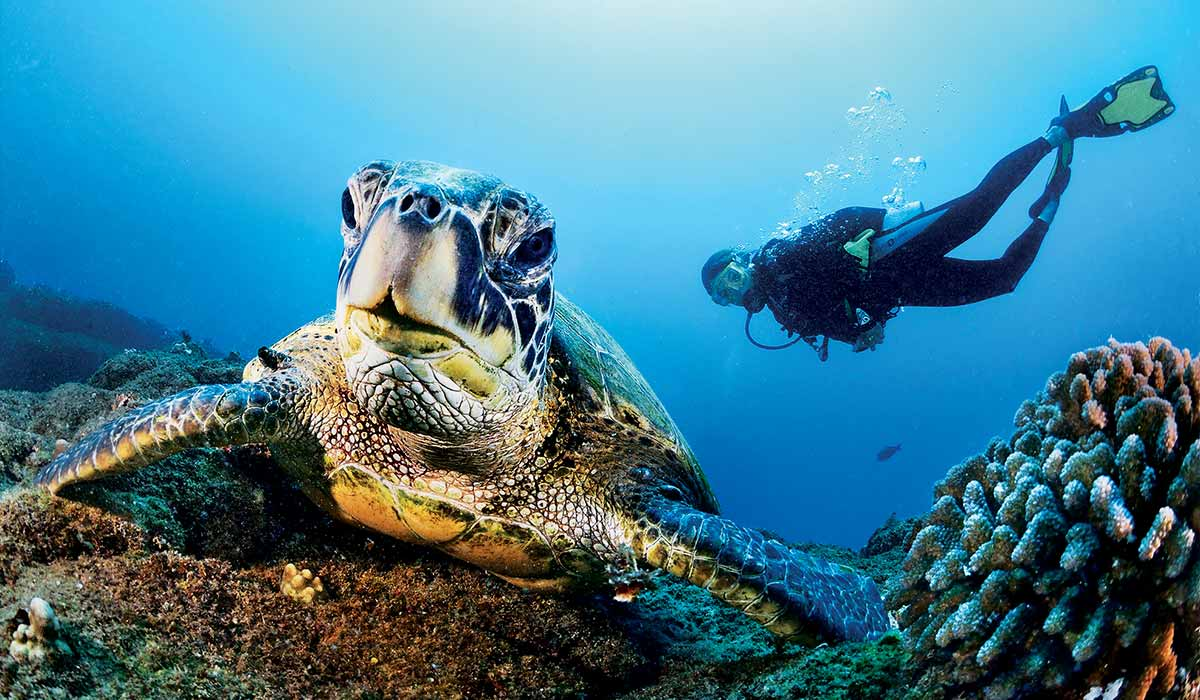 Diver swims behind a giant sea turtle