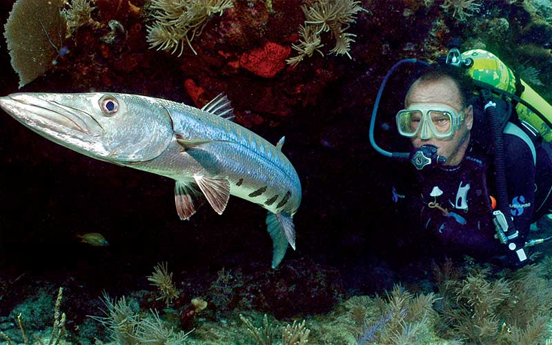 Male scuba diver chases after a silver fish