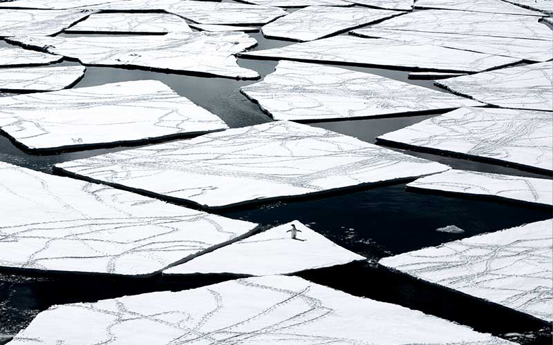 One lone penguin navigates a vast expanse of broken ice sheets
