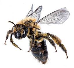 A giant, menacing bee