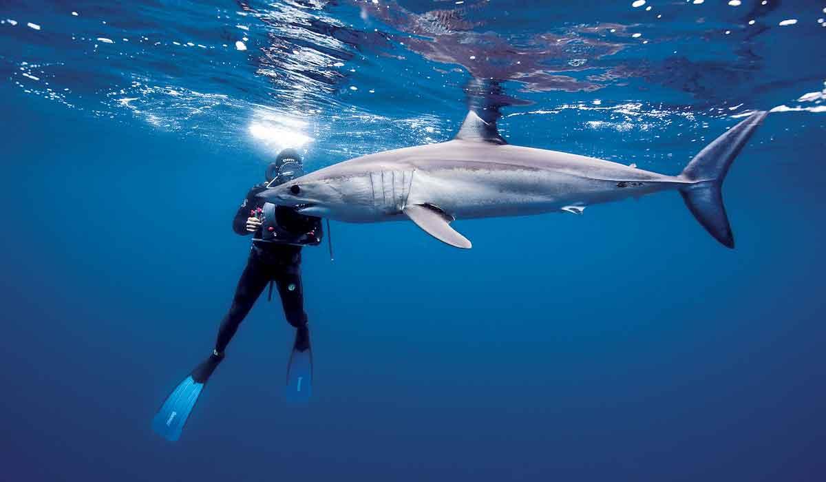 Dive photographer films a nearby shark