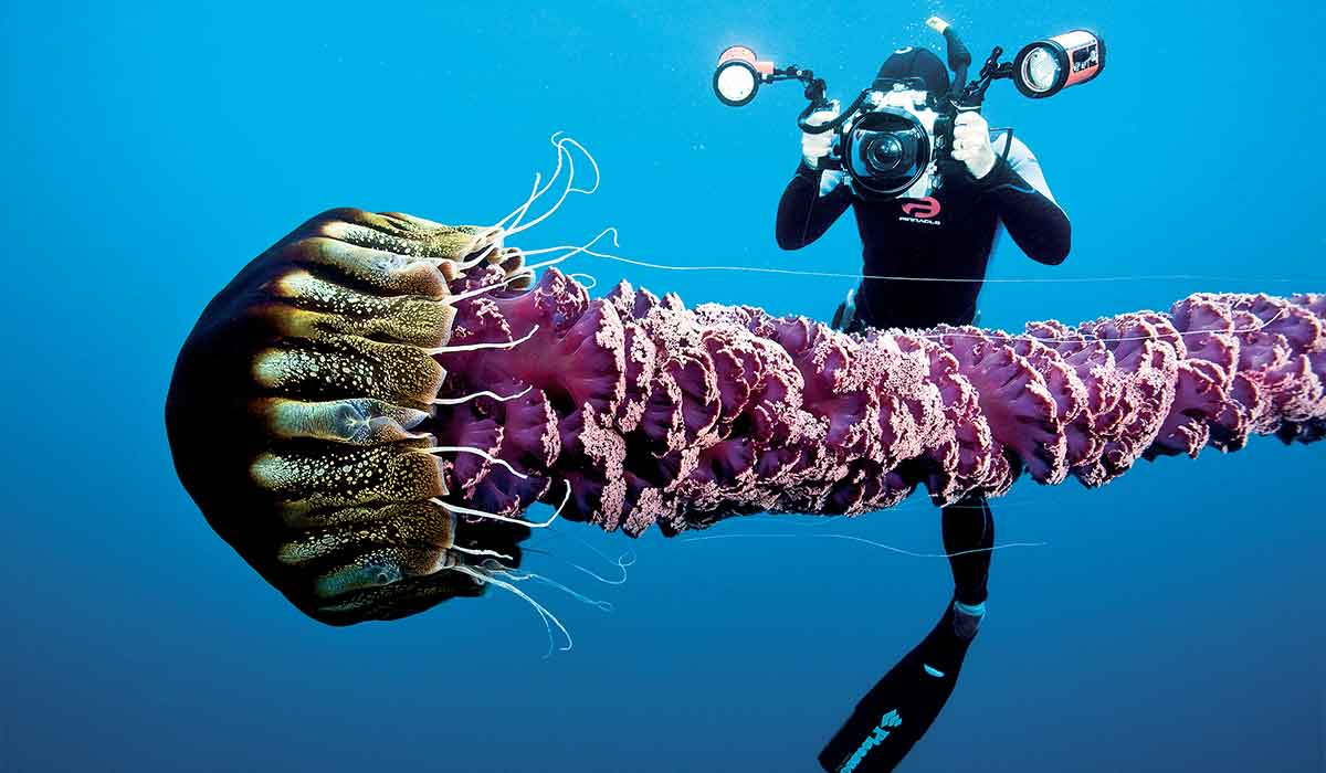 Dive photographer photographs a rare black jelly with long, plush purple tail