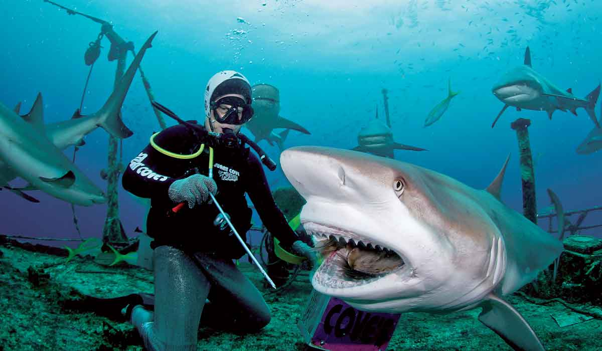 Diver holding a stick comes close to a shark's jaw