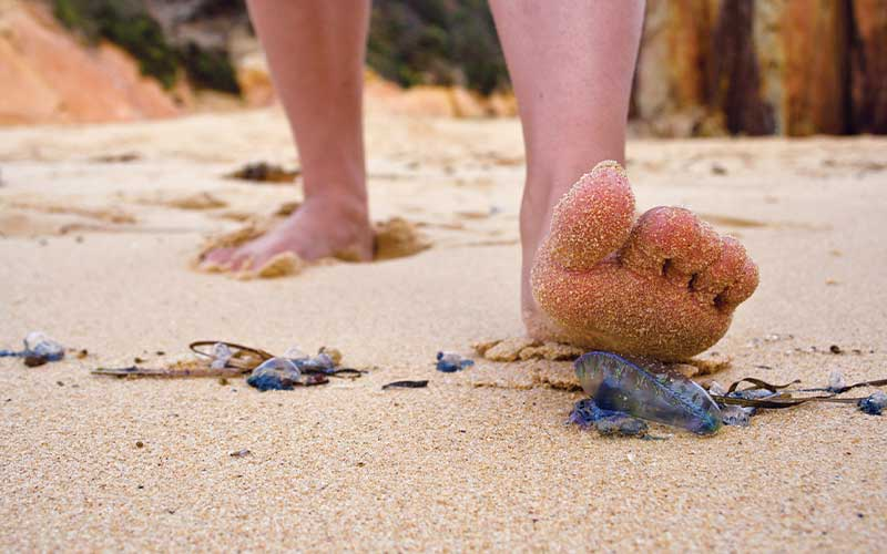 Unsuspecting left foot is about to step on a jellyfish