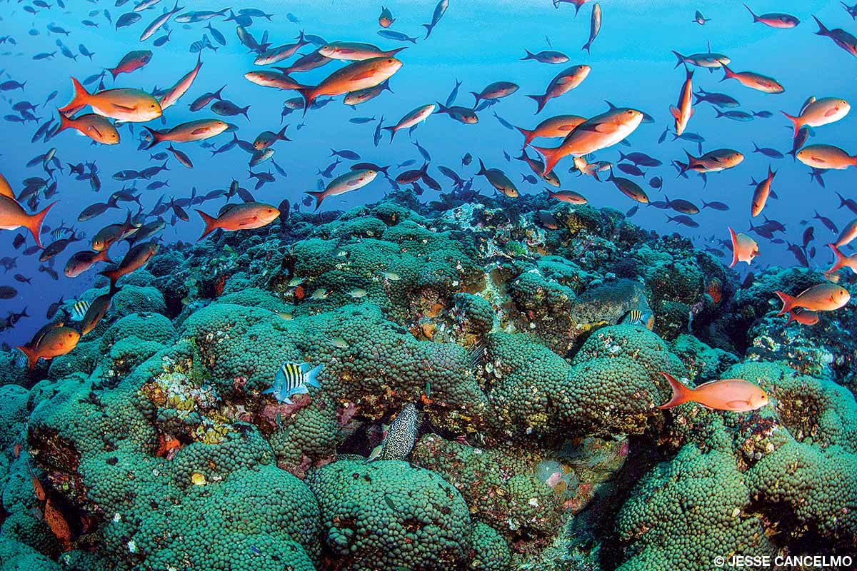 The Madracis coral formation at Stetson Bank's buoy three is a signature site at FGBNMS and often loaded with schools of creolefish.