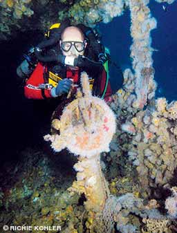 The reward for the wreck diver is to witness incredible artifacts and frozen moments in history.